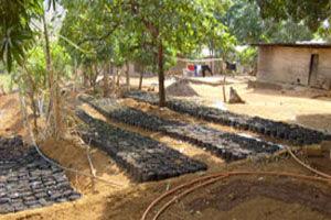 Coconut Nursery